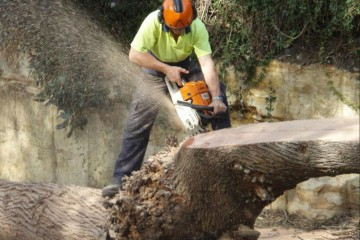 stump grinding terrey hills