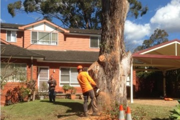tree removal terrey hills